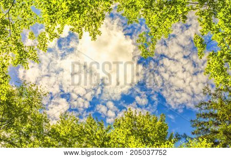 The canopy of trees framing a clear blue sky. Background for banner