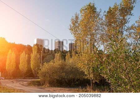 Autumn Park at sunset, the trees with yellow leaves