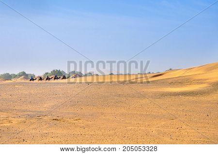 caravan of camels goes to the desert Sahara Desert dunes in bright sunny day
