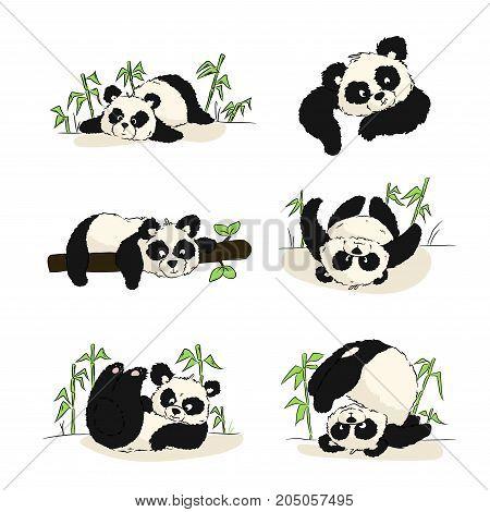 A Set Of Illustrations With A Panda Cub. Panda Sleeping, Eating, Playing. Hand Drawing.