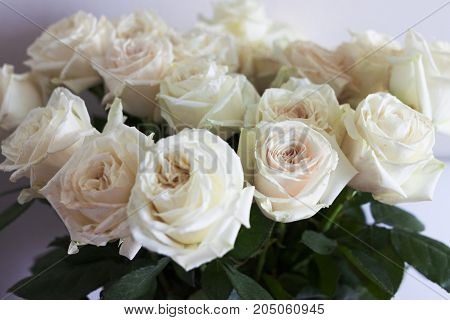 A bouquet of cream white roses. A bouquet of roses is not in focus.