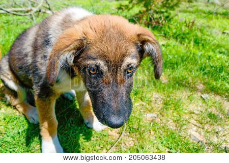 Closeup image of homeless puppy sitting on ground