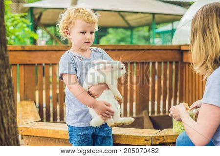 Toddler Girl Caresses And Playing With Rabbit In The Petting Zoo. Concept Of Sustainability, Love Of