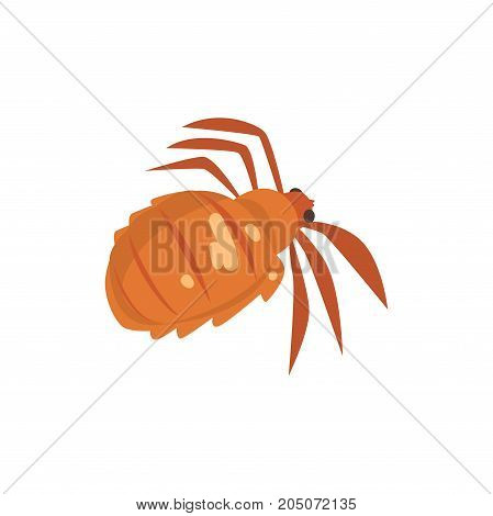Head louse insect parasite cartoon vector illustration isolated on a white background