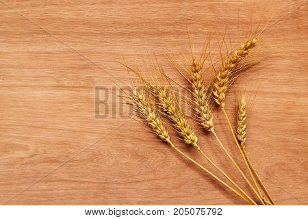 Wheat ears after harvest of cereal crops agriculture and farming concept with copy space