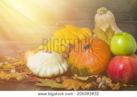 Autumn Vegetables Under The Sun In The Basement. Pumpkins, Apples, Squash, Autumn Leaves On A Wooden
