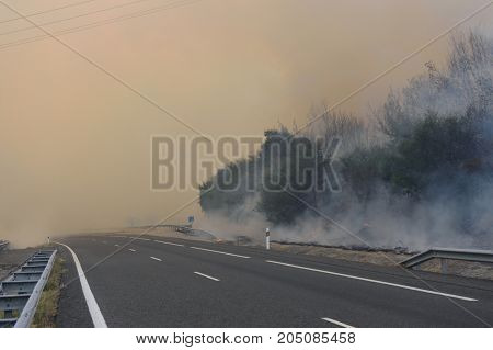 View of a Forest fire on the road