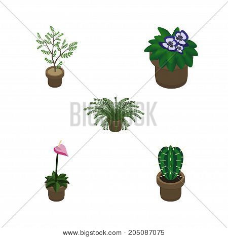 Isometric Houseplant Set Of Grower, Fern, Plant And Other Vector Objects