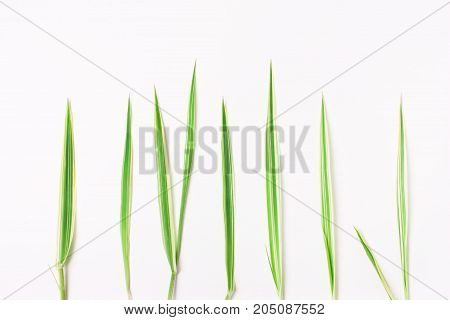 Green Grass In A Row On A White Background, Natural Concept