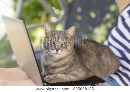 Woman working from home with her cat as an assistant on a break