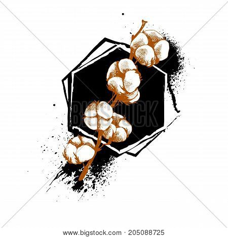 Hand drawn cotton plant in vintage style. cotton white flower plant vector