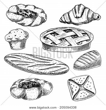 bread and pastry donut, long loaf and fruit pie. cupcake and sweet bun or croissant, chocolate muffin. engraved hand drawn in old sketch and vintage style for label and menu bakery shop. organic food