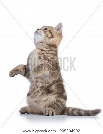 Funny cat asking for a snack isolated