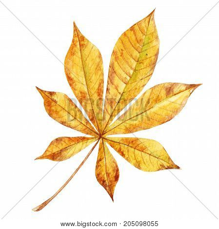 Beautiful set with watercolor composition of autumn leaves