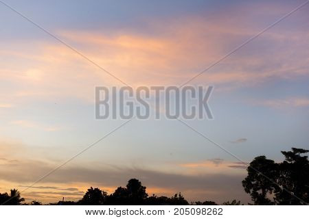 Silhouette of tree with sky in evening