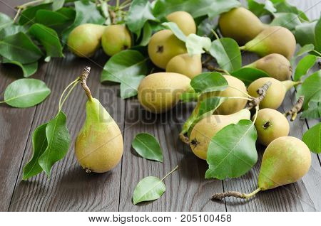 Pears on dark wooden background. Harvest concept. Selective focus