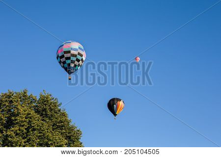 Three colorful hot air balloons set against a clear blue sky. Tree in foreground for added interest and scale. Copy space on right.
