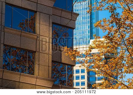 Composition of several facades of skyscrapers and autumn oak tree closeup Atlanta USA