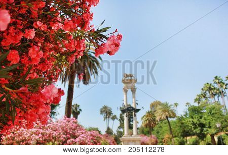 Blossom pink flowers view in Alcazar Gardens with Christopher Columbus monument on the background in Sevilla, Andalusia, Spain. Park scene on sunny summer day background with empty blue sky copy space