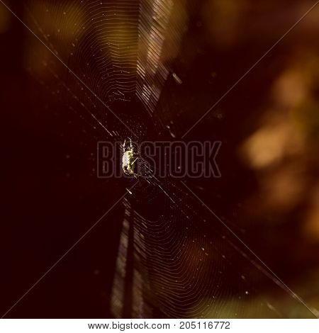 dramatic natural background spider on a cobweb in anticipation of prey