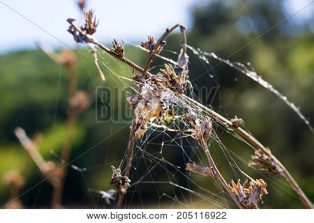natural background spider wove webs on field plants on a bright autumn day
