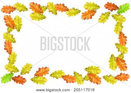 Bright colorful autumn leaves isolated on white background. oak