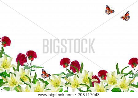 Bright colorful rose isolated on white background