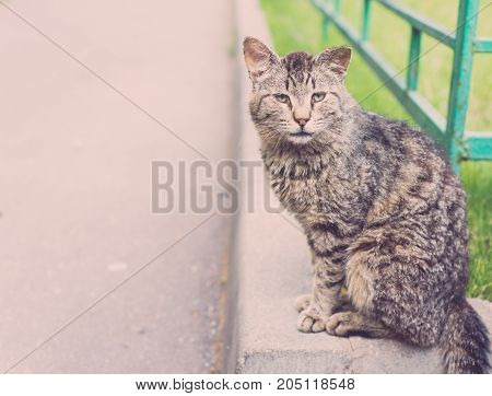 Cat seated on the road retro style photo