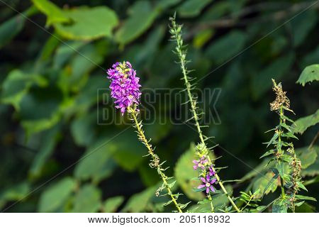 Beautiful Wild flower on a natural background