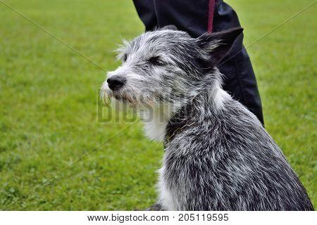 Dog On A Leash