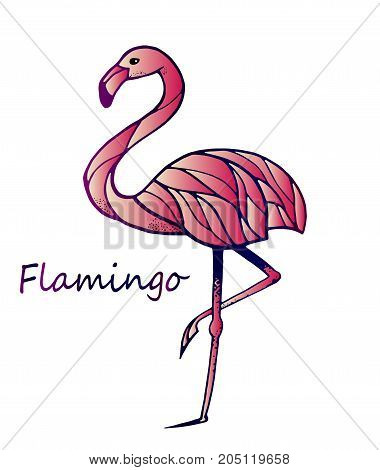 Pink flamingos on isolated white background, close-up. The idea for a beautiful sticker, stripes. Exotic bird