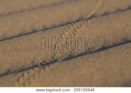 Beetle tracks across ripples in the sand