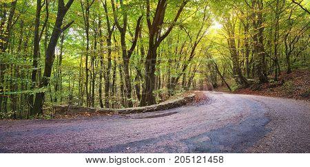 asphalt road in autumn forest. autumn way
