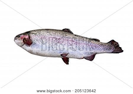 Natural fresh trout on a white background.