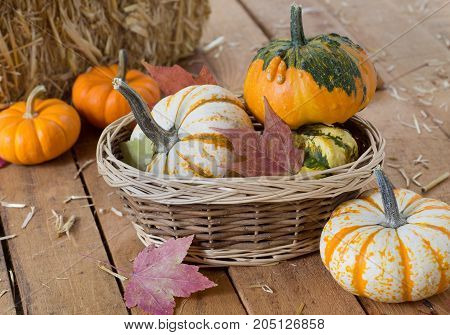 Colorful gourds with basket on wooden surface