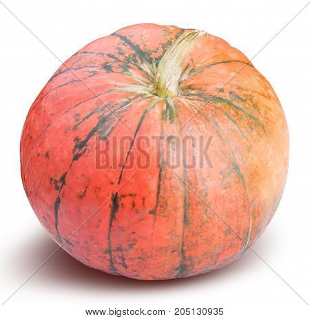 Pumpkin Isolated On White, Thanksgiving Day