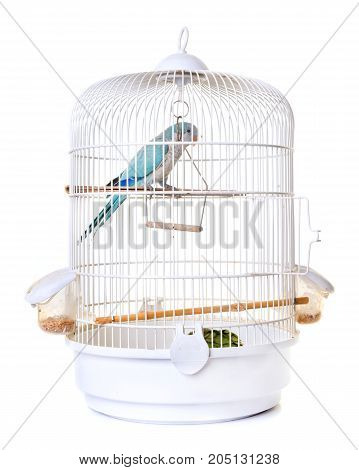 Monk parakeet in birdcage in front of white background