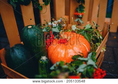 Autumn picking of vegetables: pumpkin, mountain ash, zucchini in a wooden box