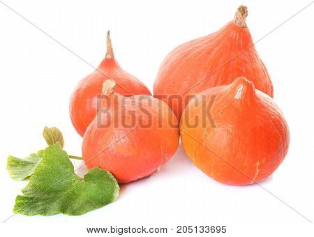 Red kuri squash in front of white background