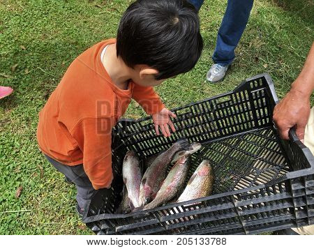 Little boy collects the catch of the day
