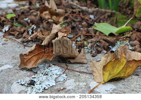 Dead leaves on an old stone bench during autumn
