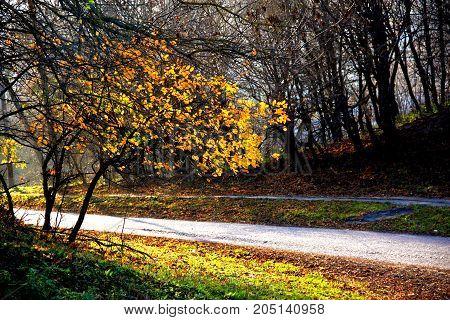 Listopadowe słoneczne popołudnie. Słońce przepuszcza swe promienie przez ostatnie liście.