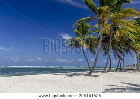 Palm trees on beach near crystal clear sea Dominican Republic