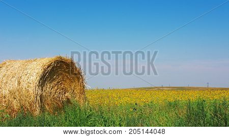 Thanksgiving background. Hay bale in a field.