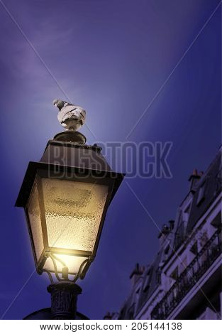 Pigeon on a lamp post at night. Mysterious.