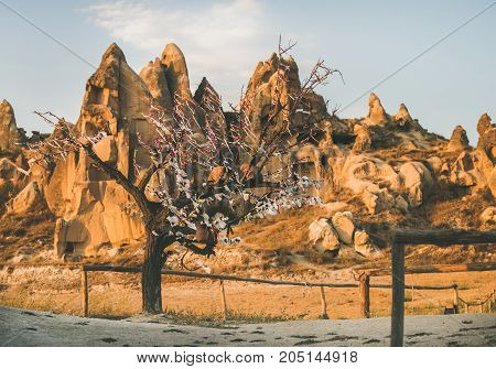 Natural volcanic rocks with ancient cave houses and tree with wish ribbons in Goreme Open Air museum in Cappadocia, Central Anatolia region of Turkey, at sunset