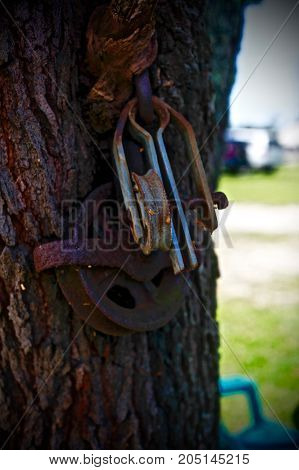 old rusty pully system hanging on the tree