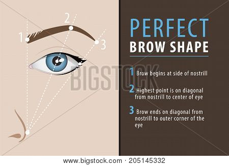 How create perfect browns, vector tutorial, beauty template