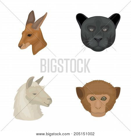Kangaroos, llama, monkey, panther, Realistic animals set collection icons in cartoon style vector symbol stock illustration .