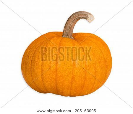 Organic Sugar Pie Pumpkin an ideal pumpkin for holiday baking and cooking. Isolated on white background.